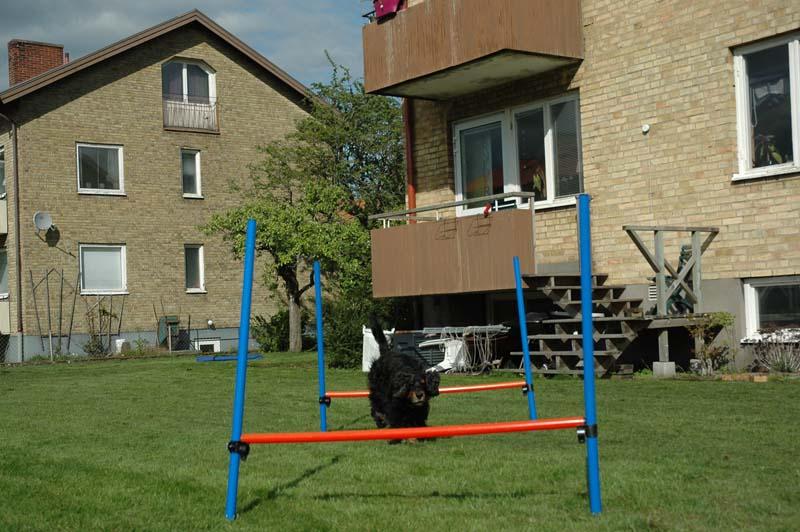 Hopp-skoj i trädgården
